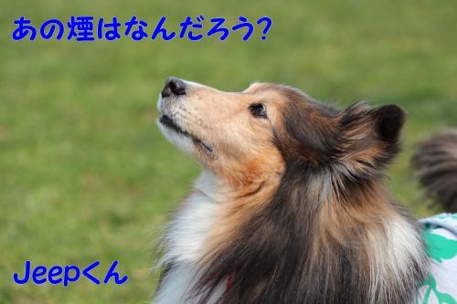 255_convert_20130415141919.jpg