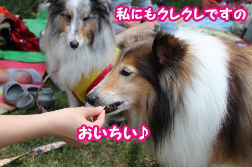 309_convert_20130529170851.jpg
