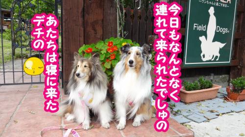 323_convert_20130602171806.jpg