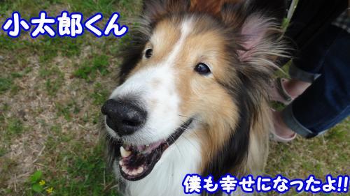 452_convert_20130527160028.jpg