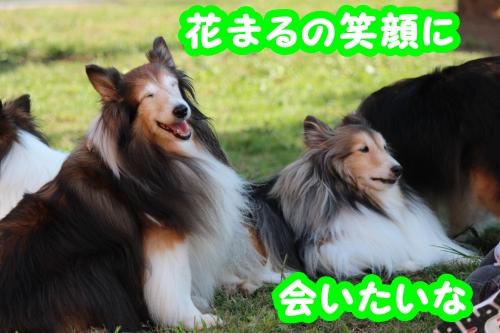 606_convert_20130831103542.jpg