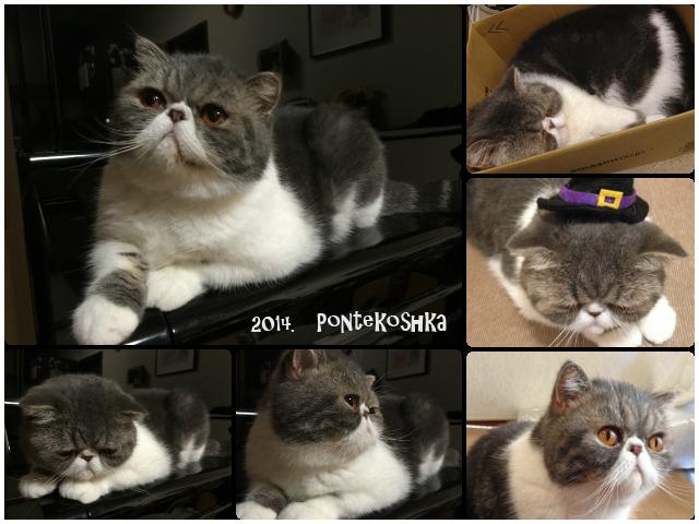 20141101-pon.png