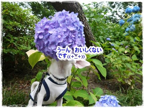 076_20130622221349.jpg