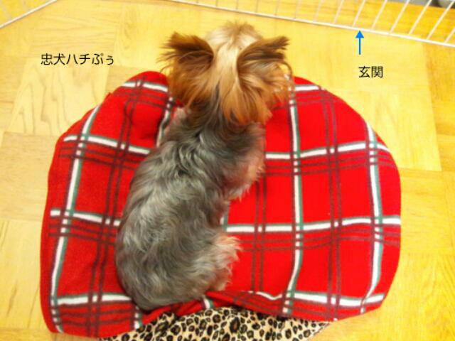 fc2_2013-12-29_06-50-17-070.jpg