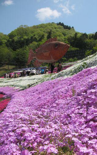 2013-0428_yamasaShiba02.jpg