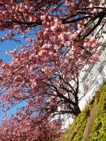 呉羽丘陵植物公園