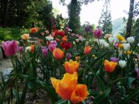 花の家のチューリップ