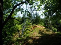 みどりの森