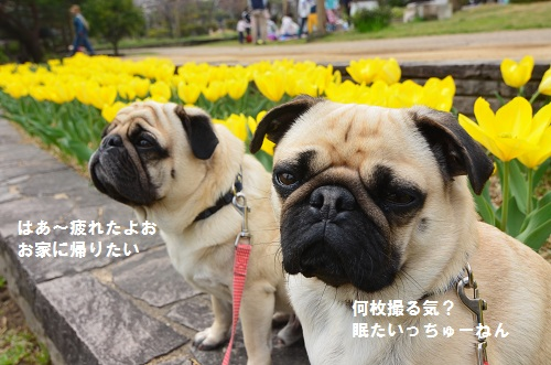 ちうりっぷ2