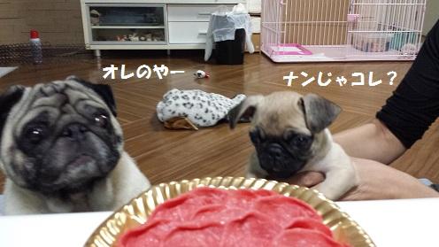 お肉   2