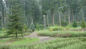 薬草薬樹公園