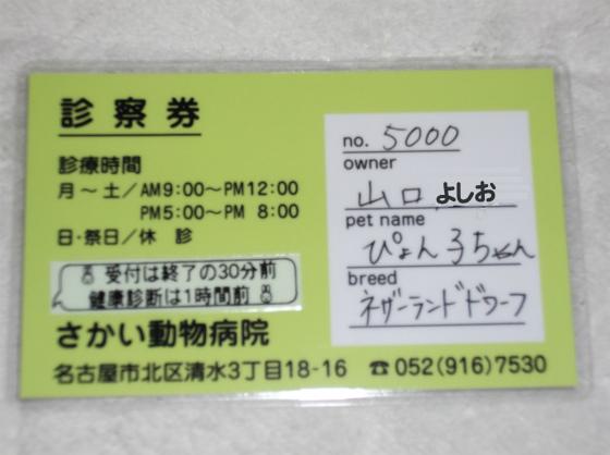 ぴょん子130912_01