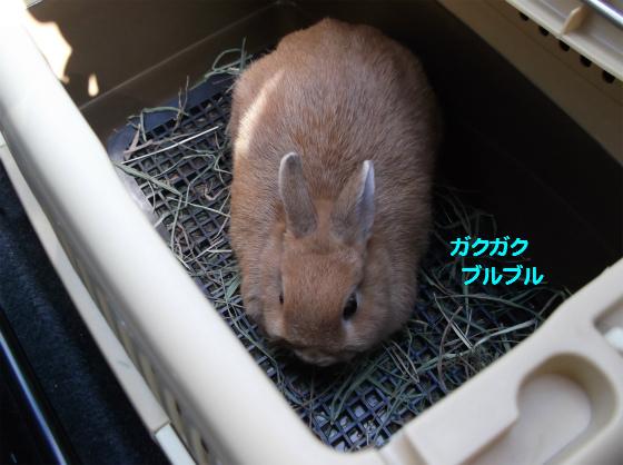 ぴょん子131030_03