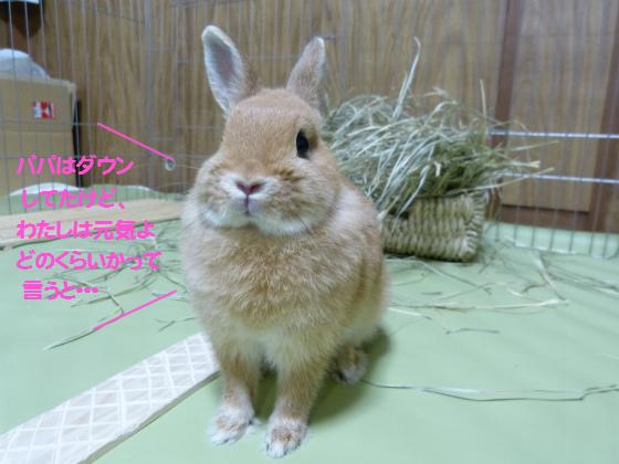 ぴょん子130819_03