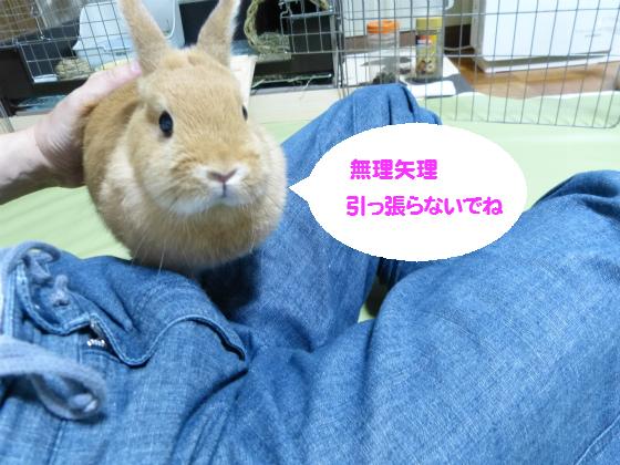 ぴょん子130826_01