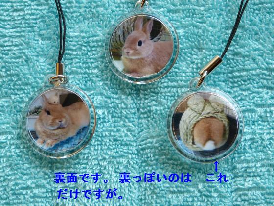 ぴょん子130923_04