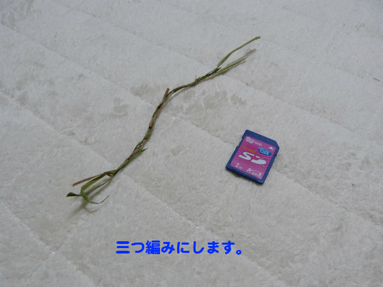 ぴょん子131023_03