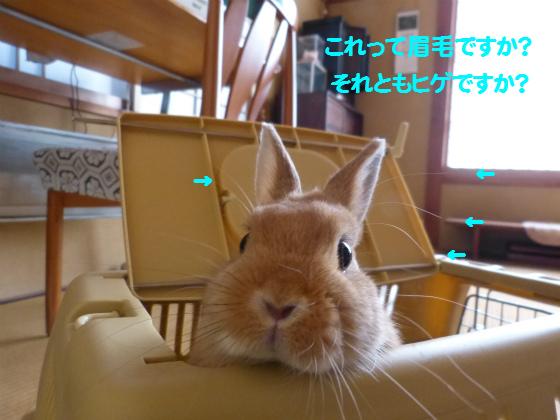 ぴょん子131026_12