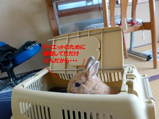 ぴょん子131026_17