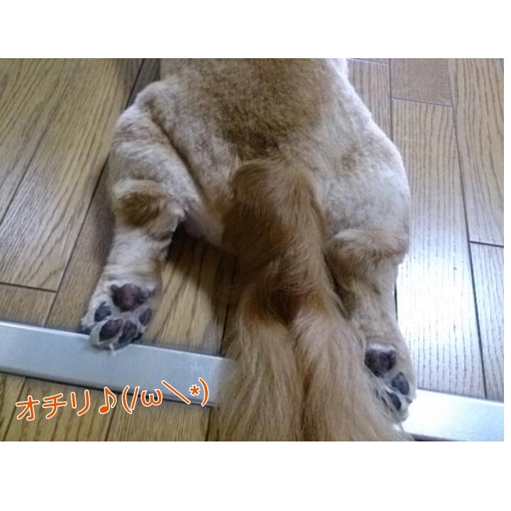 PhotoGrid_1374130462783.jpg