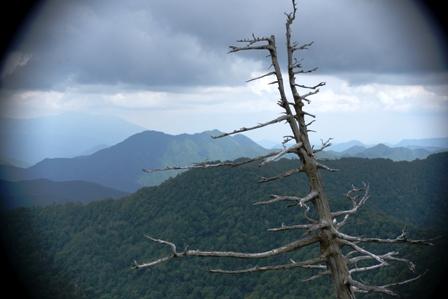 田代山への登山道より