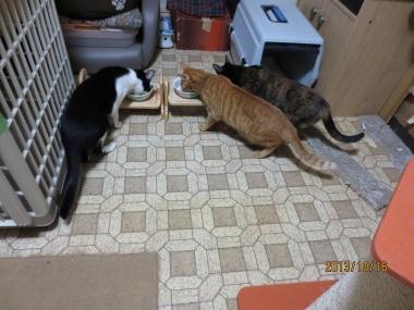 2013.10.16-4 ochibi-trio
