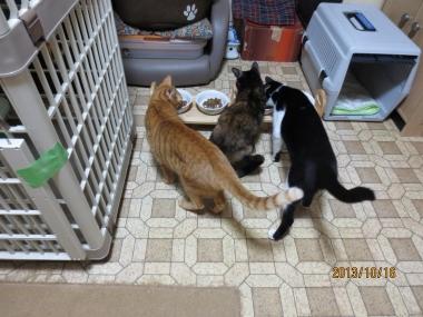 2013.10.16-10 ochibi-trio