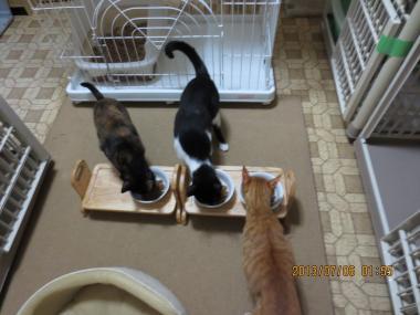 2013.07.06-2 ochibi trio
