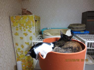2013.09.09-4 nao & yuka & yuki