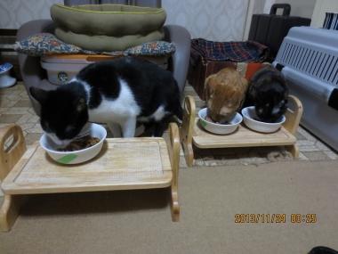2013.11.24-1 ochibi trio