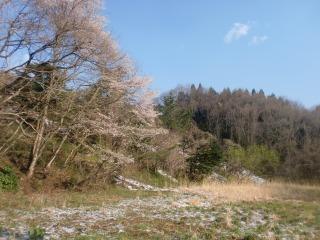 2013年04月22日 桜と雪