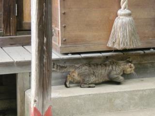 2013年07月07日 千手観音堂・猫2