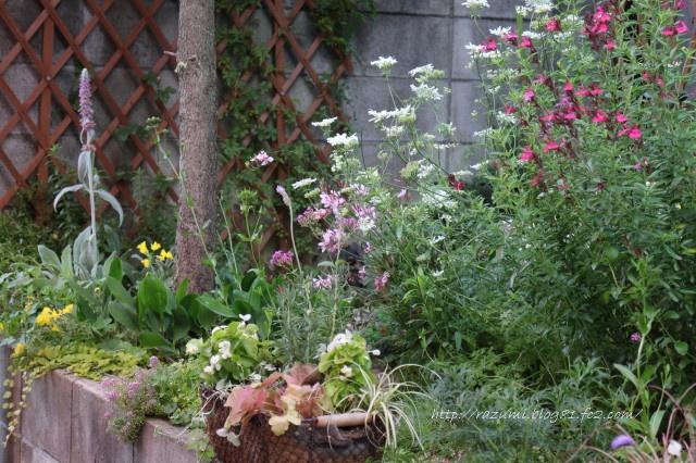 南側半日陰花壇