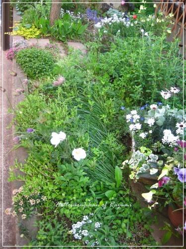 南側花壇ハナミズキの下