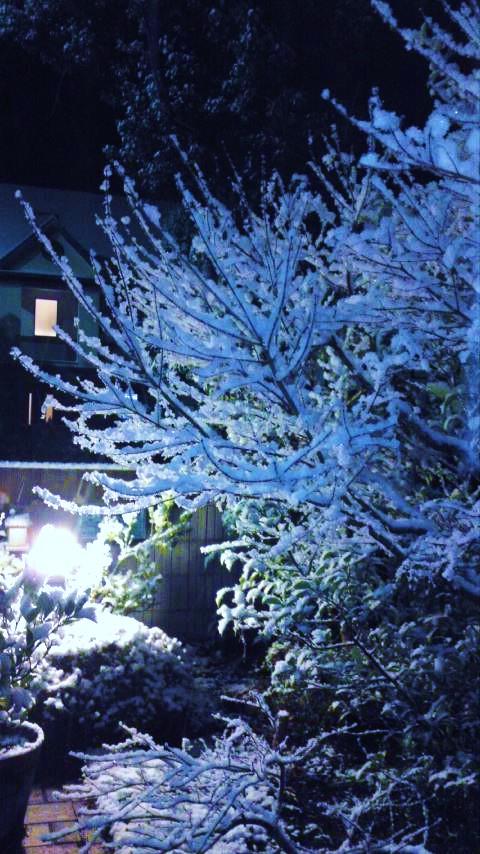 140204積雪