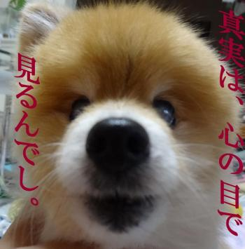 縺ー繝シ縺ー_convert_20130621212622