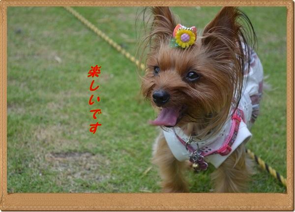DSC_0086_20130803213124f58.jpg