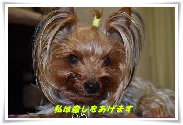 DSC_0229_20130606211722.jpg