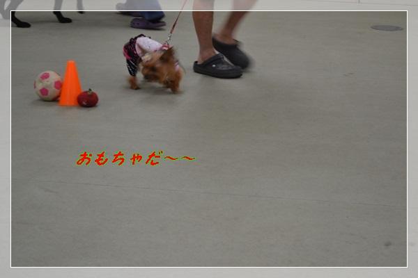 DSC_0301_20130825203636378.jpg