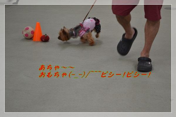 DSC_0302_20130825203637a92.jpg