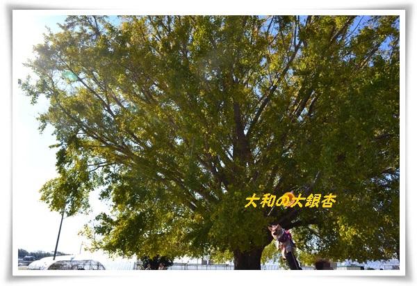 DSC_0482_20131130204344c56.jpg