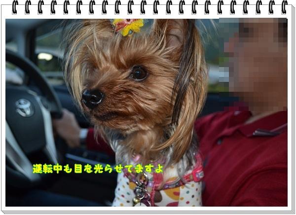 DSC_0922_20130505195418.jpg