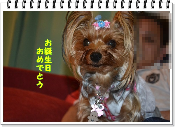 DSC_0959_20130505213209.jpg