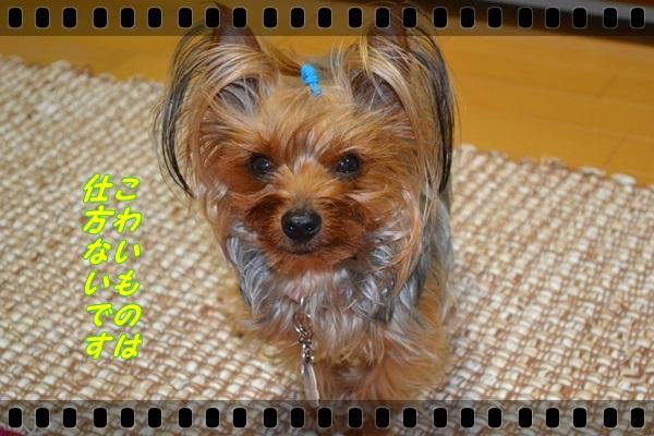 DSC_0988_20130510222558.jpg