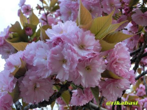 CIMG1224_20130502020603.jpg