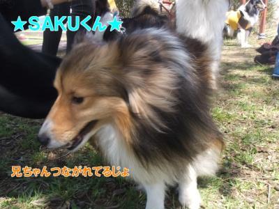 ★SAKUくん★