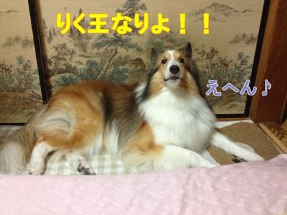 りく王なりよ!!