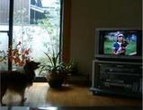 テレビに犬がいる!?