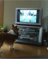TVに犬が-2