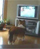 TVに犬が-3